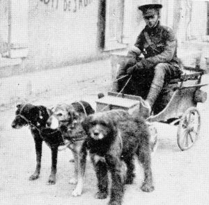 Before the Great War this is what a dog-cart meant in Belgium. Source owlcation
