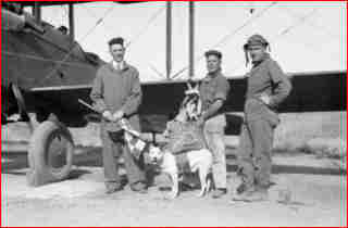 Jeff, the mascot of the 120th Colorado Air National Guard, the first dog to jump with a parachute. Source History Daily.