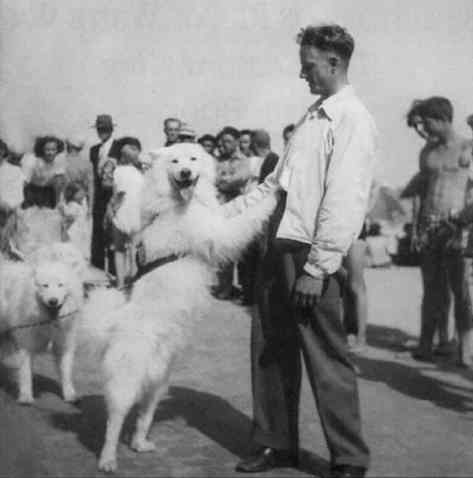 Rex and LloydVonSickel. Rex was one of the Samoyeds volunteered for service in the U.S. Army. Several dogs were trained to parachute from small aircraft for remote rescue missions. Source Tahoe Weekly