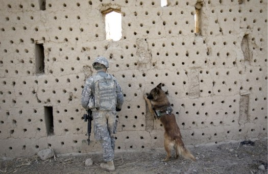 U.S. sergeant Matthew Templet and his bomb-sniffing dog Basco search for the explosives in an abandoned house in Haji, Ghaffar village, during a clearance patrol in Zari district of Kandahar province, Afghanistan on Dec. 27, 2010.Source Foreign Policy