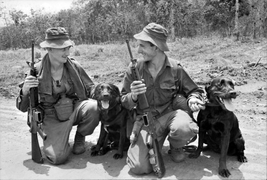 Two sniffer dogs, 1967, South Vietnam, 7th Battalion Royal Australian Regiment. Justin, left, and Cassius,right, with Lance Corporal Thomas Douglas and Cpl. Norman Leslie. Cpl Blackhurst, a radio operator, was killed in action in April 1971 while calling in a helicopter for a medical evacuation. The helicopter crashed, killing L Cpl. Blackhurst, another officer on the ground, as well as the medic on board. Source Foreign Policy.