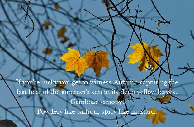 gamboge. autumn @PatFurstenberg