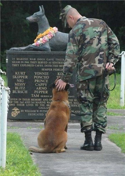 Marine war dogs memorial, Military Working Dogs in Gulf, Iraq, and Afghanistan War.