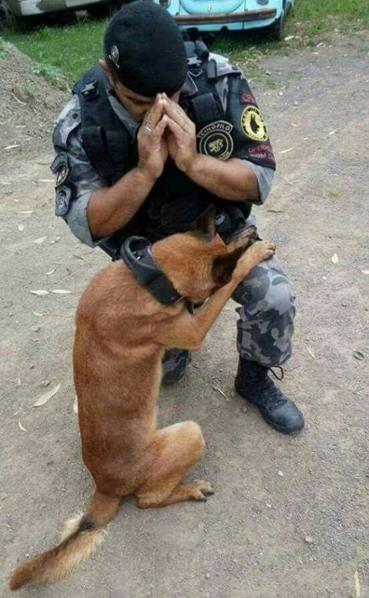 Praying together. A military dog and his human handler, Military Working Dogs in Gulf, Iraq, and Afghanistan War.