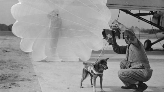 A parachuting dog of WW2 - source Spiegel