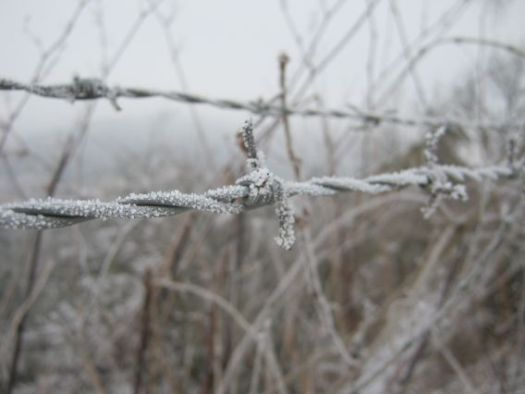 barbed wire frozen in winter