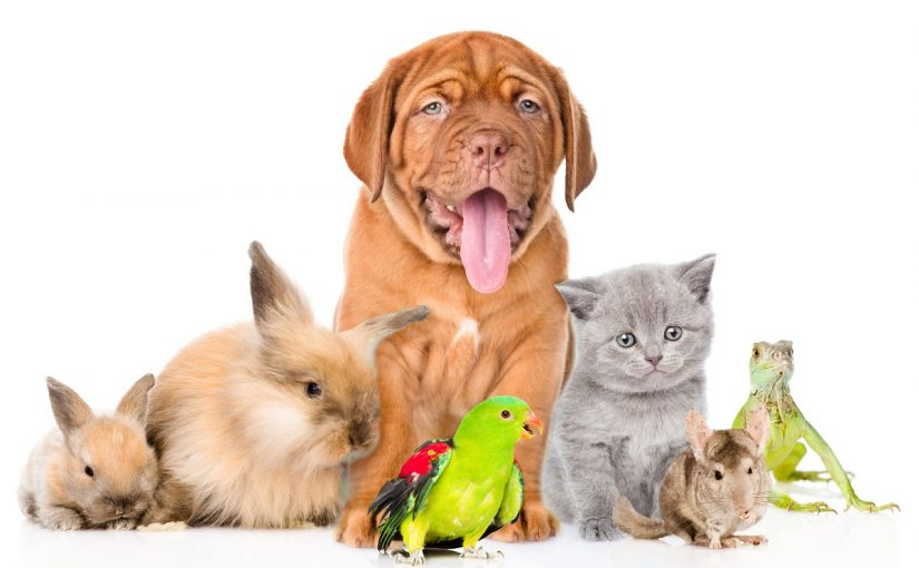 Effect of Pets on the Immune Systems