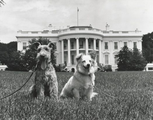 Charlie and Pushinka on the South Lawn - White House, after the Cuban Crisis.