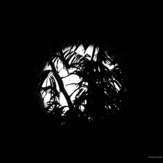 Black and White photography of Moon Trees