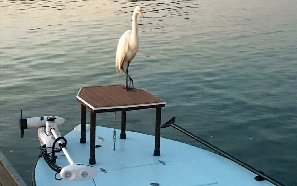 Bird hanging out on boat with trolling motor raised up out of the water.