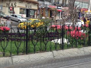 Istanbul tulips everywhere