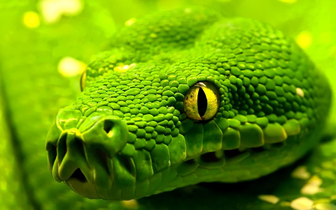 Snakes: Show me your teeth and I'll tell you who you are
