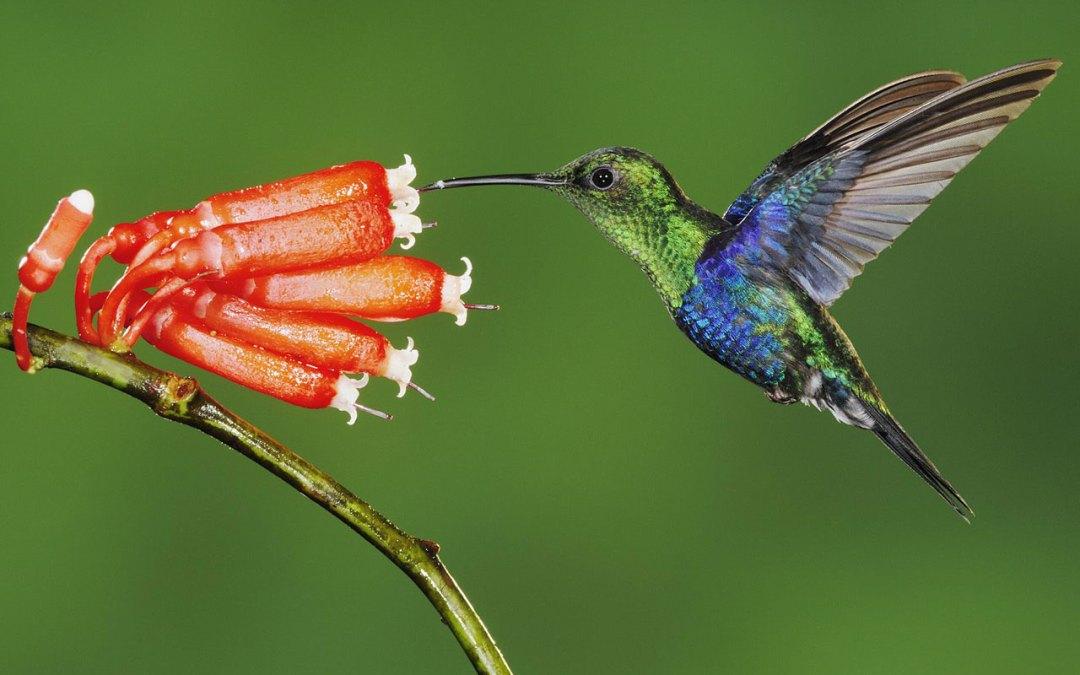 Evolució per a principiants 2: la coevolució