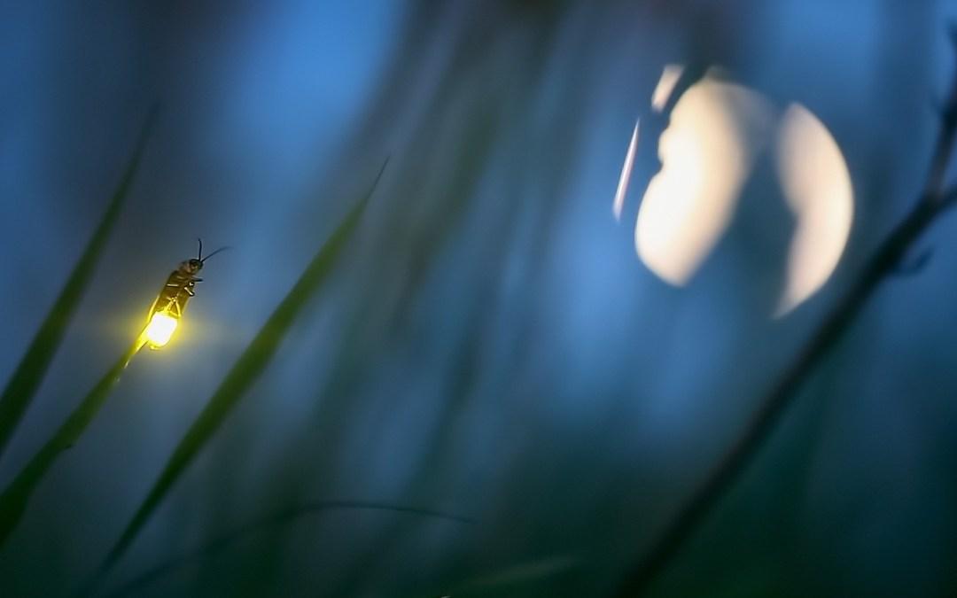 ¿Cómo se comunican los insectos?