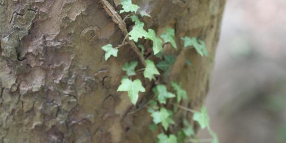 Fotosíntesis y vida vegetal