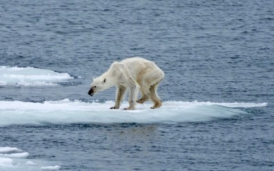 The Arctic: who cares?