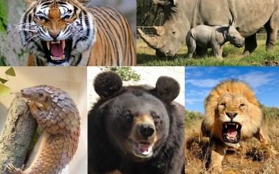 Los 5 animales más amenazados por la medicina tradicional china