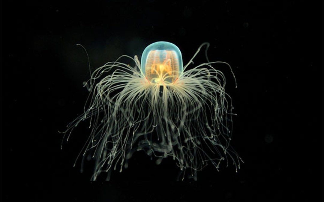 The elderly organisms of the oceans