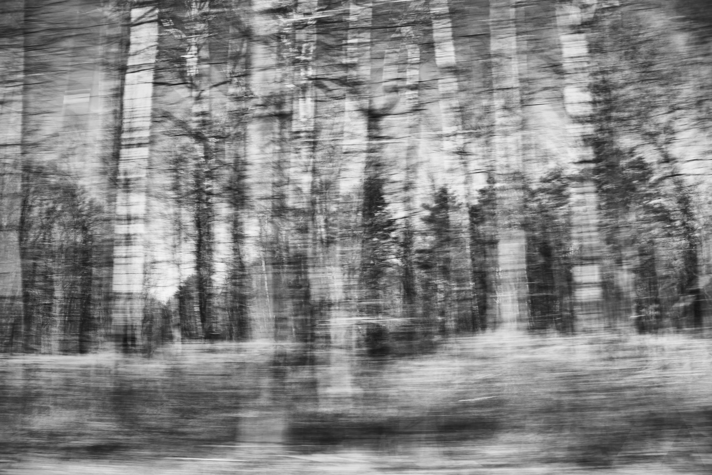 Driving past forest