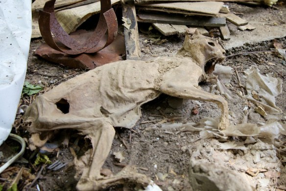Mummified cat.  (c) Allyson Scott