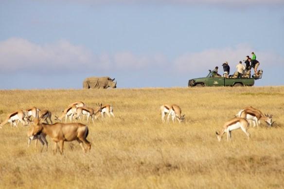 Garden Route Game Lodge safari Jeep, rhino, and springbok  (c) Allyson Scott
