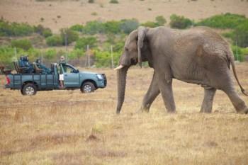African elephant and safari Jeep (c) Allyson Scott