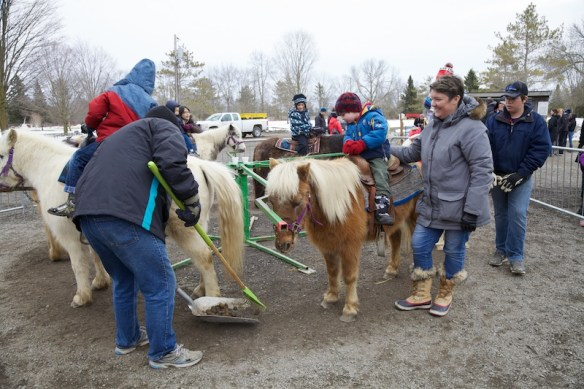 Scooping at the pony ride