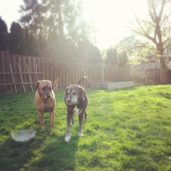 Gracie and Ebony