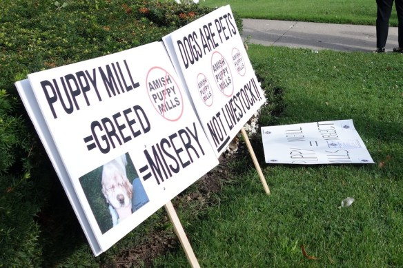 Animal welfare protest signs