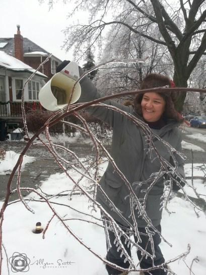 Jody de-icing a birch sapling