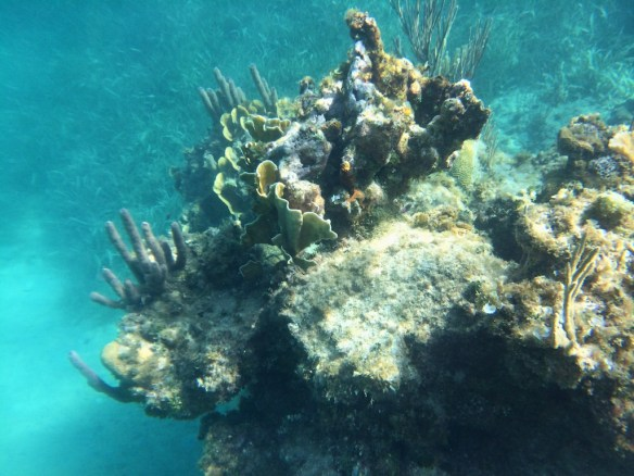 Coral reef, Jibacoa
