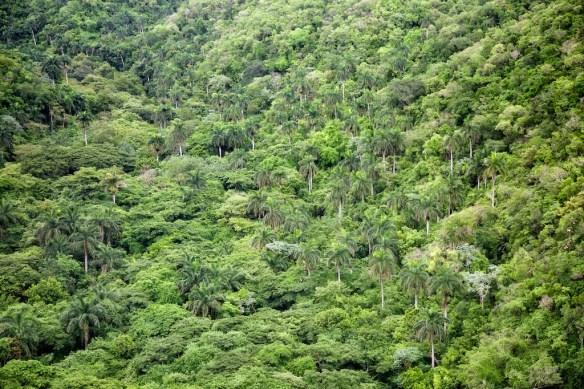 Jungle seen from Bacunayagua Bridge