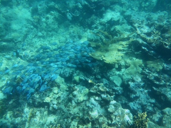 School of tropical fish in coral reef