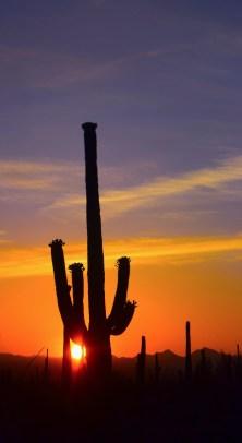 saguaro32