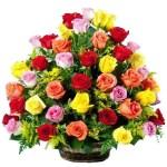 Reinbow roses. Floristería ALMA FLORAL Bogotá