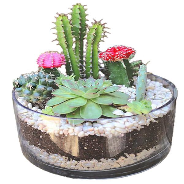 terrario-jardin-de-cactus Floristería Alma floral Bogotá
