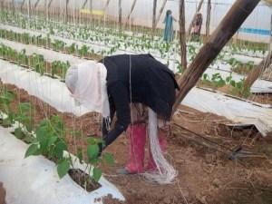 agricilture 3