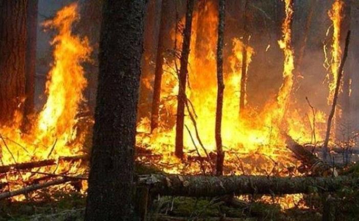وفاة عنصر بمندوبية المياه والغابات في حريق غابوي بالشمال