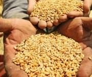 المصيلحي: لو العالم كله قفل في تصدير القمح عندنا احتياطي يكفي 8 شهور