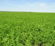 «الفلاحين»: الأرض الزراعية الطينية مهددة بالانقراض في أقل من 100 عام