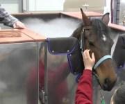 لأول مرة في العالم.. تكنولوجيا التبريد لعلاج الخيول في دبي