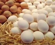 أسعار البيض في الأسواق اليوم الخميس 27-2-2020