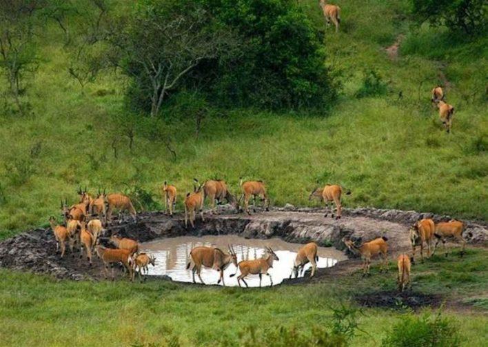السياحة في اوغندا..وأجمل الأماكن السياحية التى تضمن لك رحلة مميزة لا تنسى