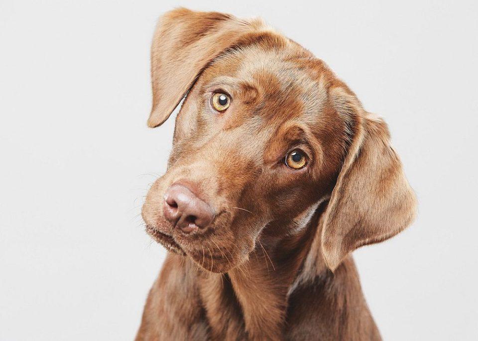 Los primeros días con un perro pueden ser difíciles