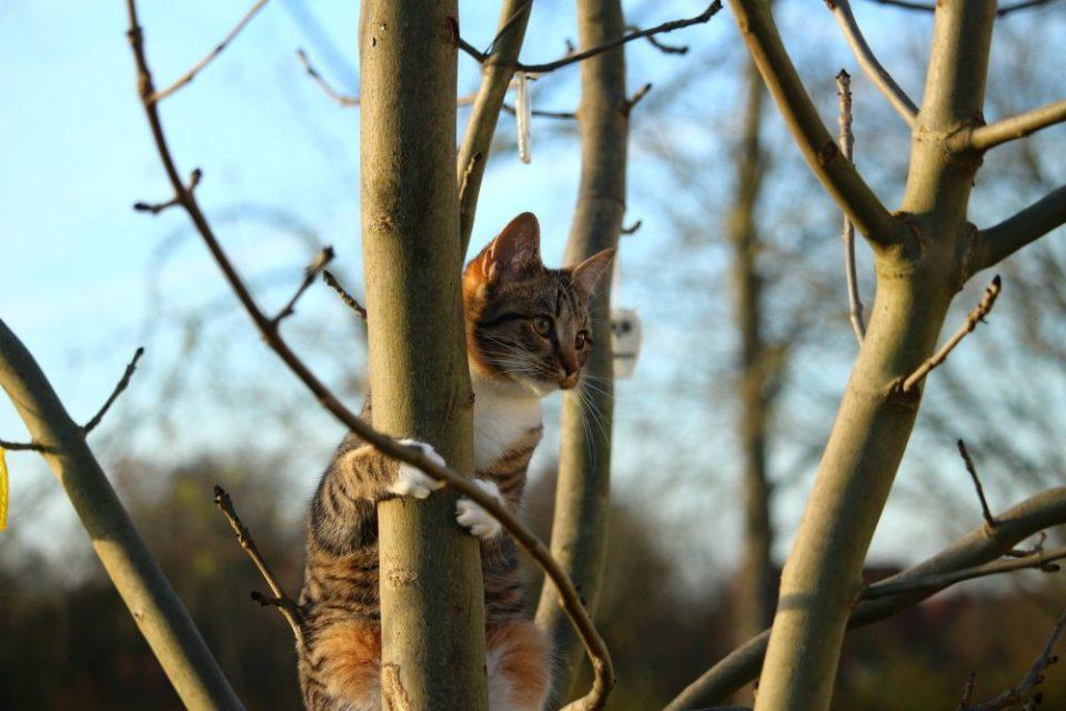 Las curiosas habilidades de los gatos