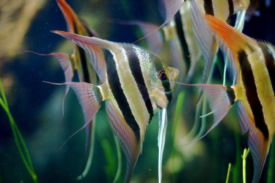 Cuidados de los peces de agua caliente