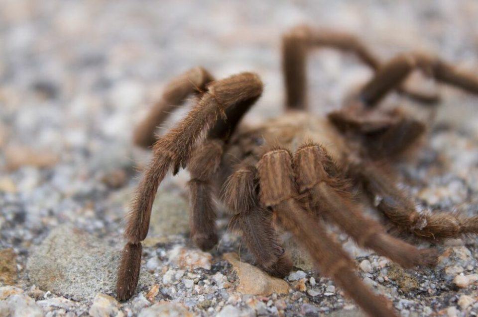 los terrarios para tarantulas - qué valorar