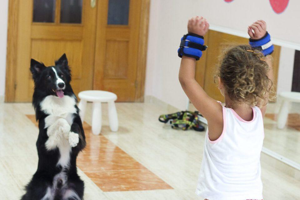 Terapias con perros