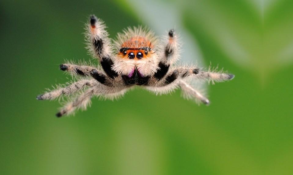 Un buen motivo para no matar a als arañas que viven en tu casa es que comabten plagas