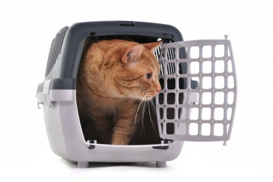 Viajar en avión con gato